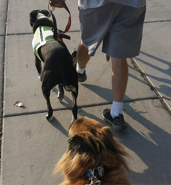 Dog Walk Etiquette: Leashes
