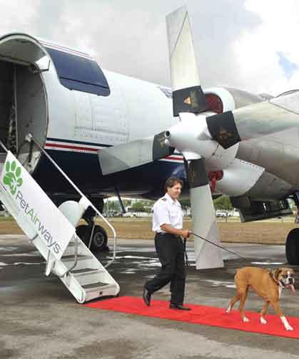 dog on plane