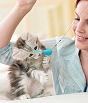 cat-sitters-01012