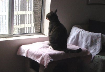 lookout-cat-29103