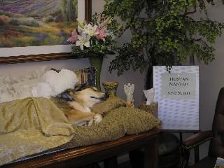 tristan-funeral