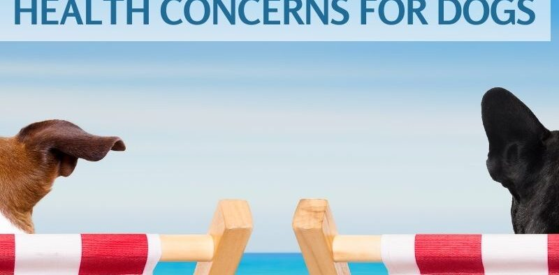 Top 5 Summer Health Concerns Dogs