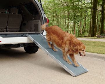 Dog on ramp