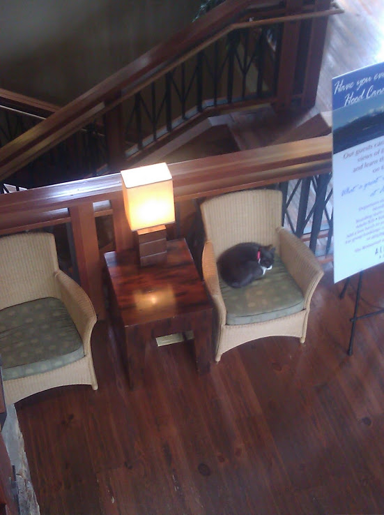 Alderbrook Resorts Famous Lobby Cats