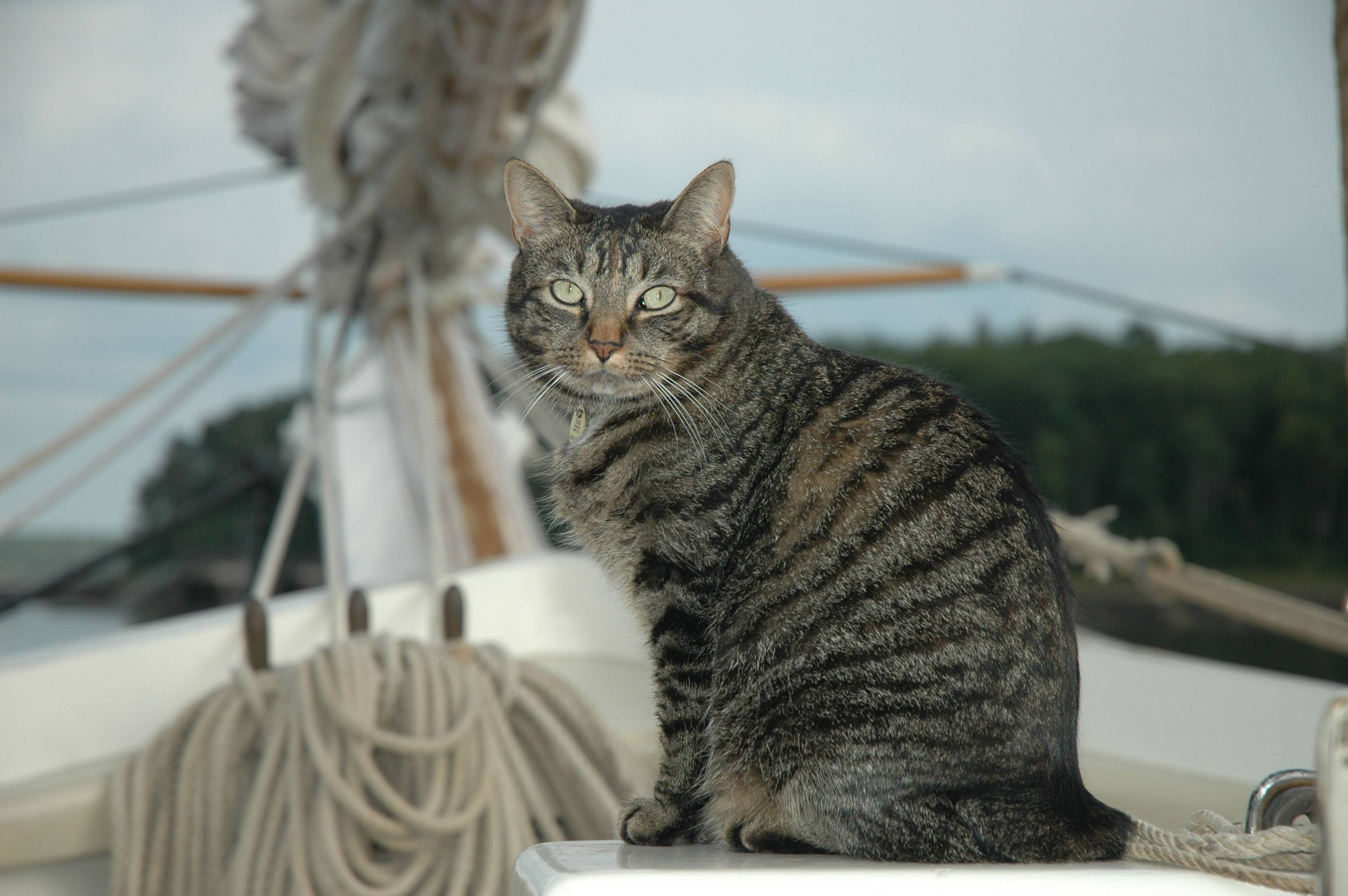cats on boats