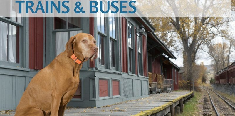 dogs on trains and buses