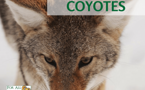 Protecting pets from coyotes
