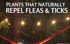 naturally repel fleas and ticks