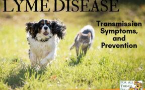 Lyme Disease in Pets