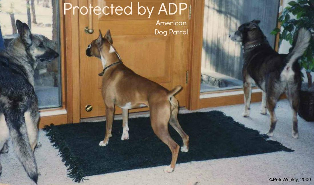 Training Tips Training Dogs To Ignore The Doorbell Petsweekly