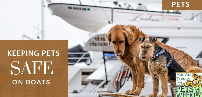 Keeping pets safe on boats