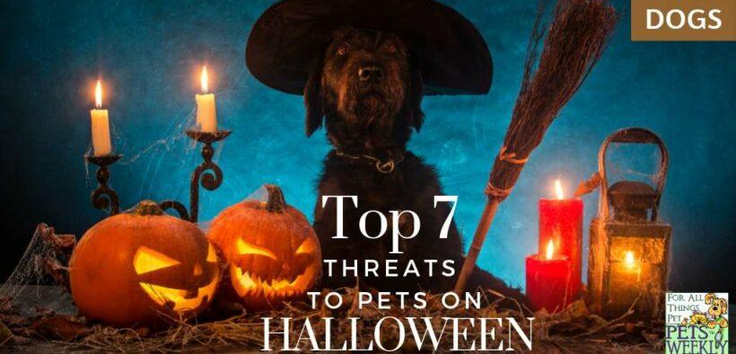 halloween threats to pets