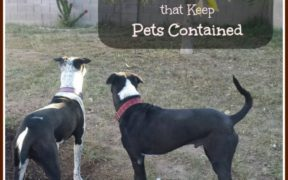Fencing solutions for pets