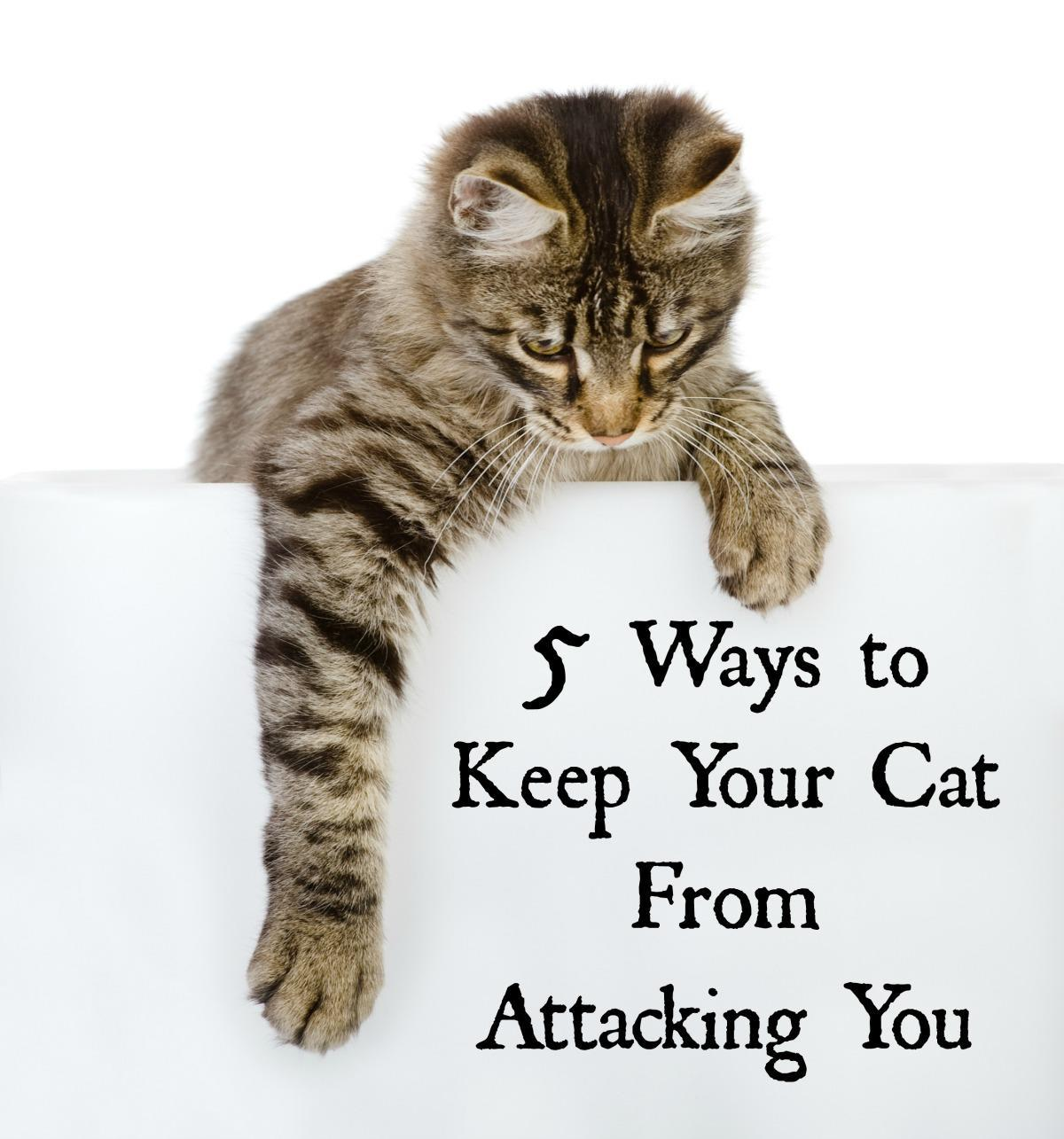 How to Keep a Cat if You Are Allergic to Cats pictures