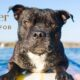 summer-skincare-pets-pw