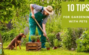 10 Tips for Gardening with Pets