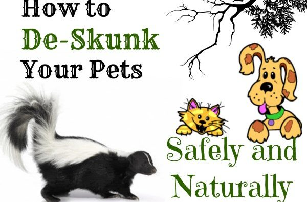 Eww, that Smell! How to De-Skunk Your Pets Safely and