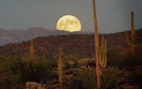 desert moon with saguaro