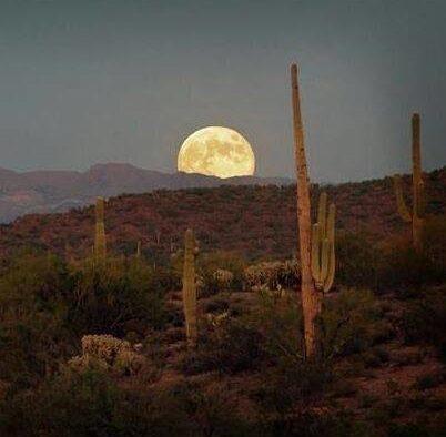 desert moon with saguaro