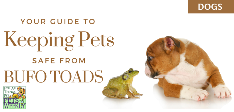 Desert Toads and Dogs