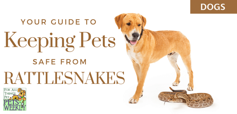 Keeping pets safe from rattlesnakes