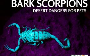 Scorpion Dangers to Pets