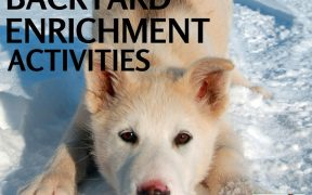 backyard enrichment activities dogs