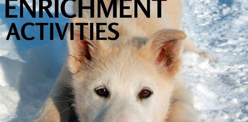 backyard enrichment activities dogs