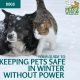 Keeping Pets Safe in Winter without Power