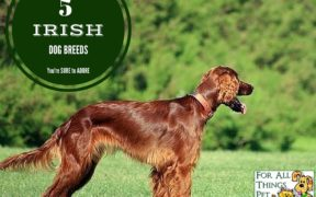 irish dog breeds