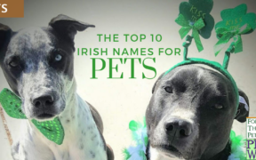 irish-names-pets