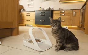 surefeed cat feeder