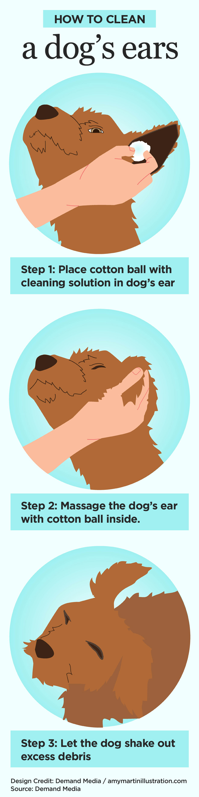 How to clean a dog's ears infographic