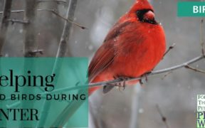 Helping Wild Birds in Winter