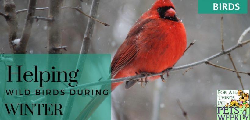 Helping Wild Birds in Winter