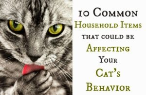 10 reasons your cats are behaving badly