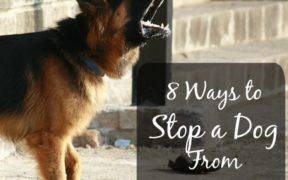8 ways to stop a dog from barking