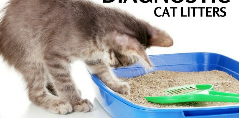diagnostic cat litters
