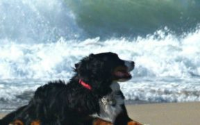 ocean dog