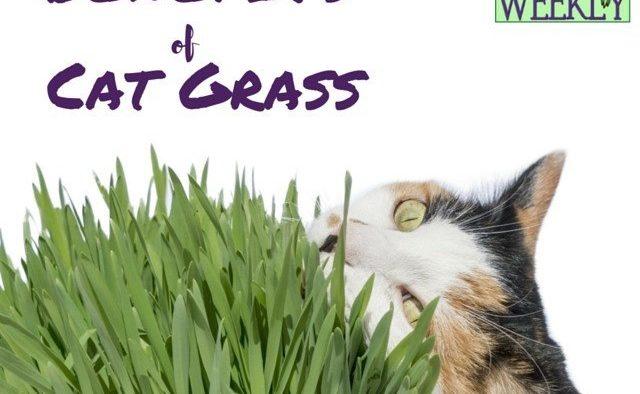 Benefits of cat grass