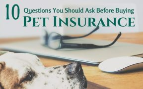 10 questions to ask before pet insurance