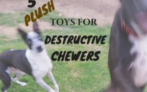 Plush toys for destructive chewers