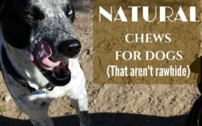 Natural Chews for Dogs