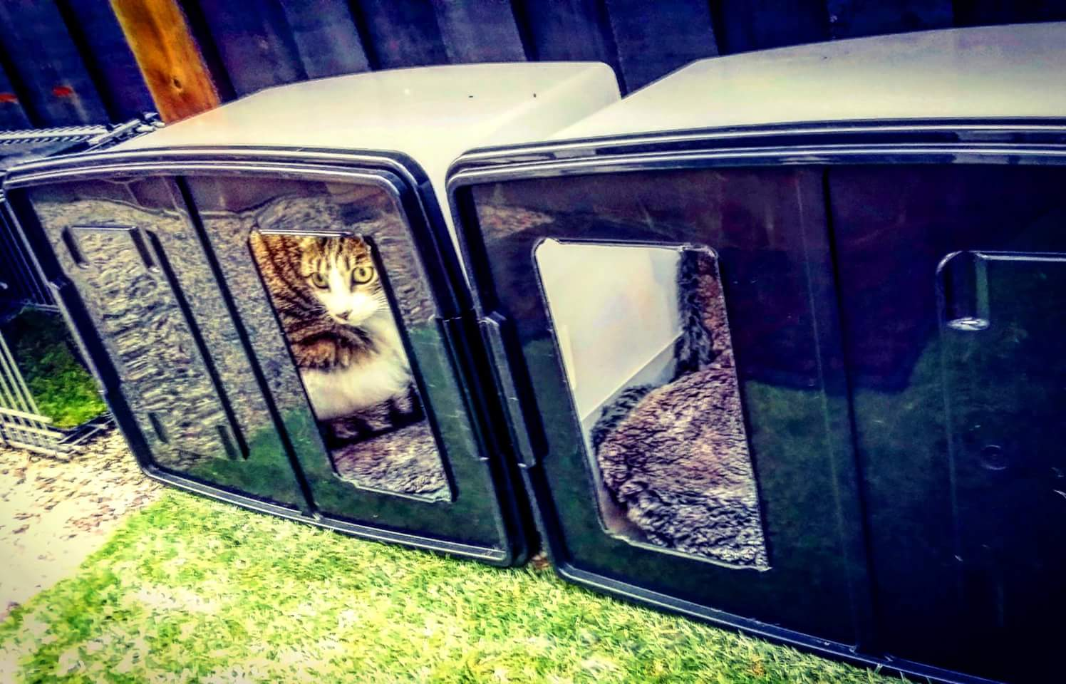 CZ-cat-enclosure7