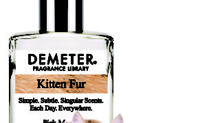 cat product review