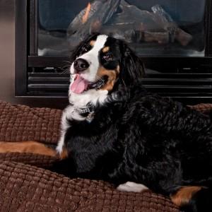 Dazzle your Dog at Pet-Friendly XV Beacon in Boston, MA