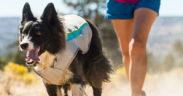 ruffwear dog cooling vest