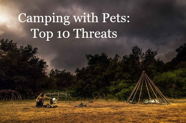 Camping with Pets: Top 10 Threats