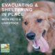 Evacuation with Pets