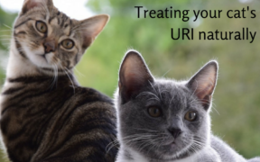 Natural Remedies for Cats